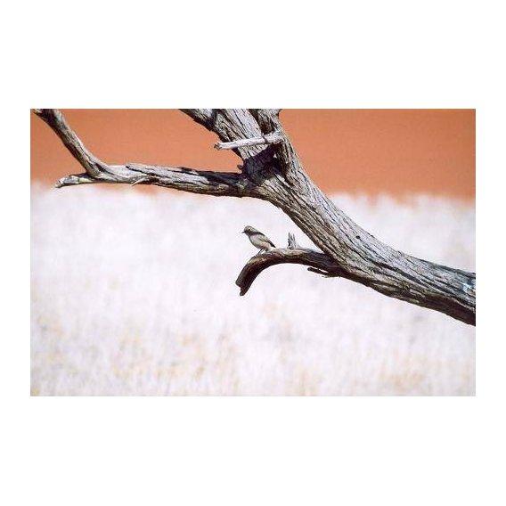 cuadros de fotografia - Cuadro -Foto 56-