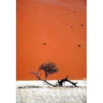 cuadros de fotografia - Cuadro -Foto 57- - PHOTO12