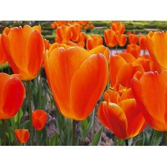 cuadros de flores - Cuadro -Moderno CM3589- - Medeiros, Celito