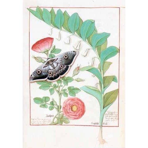 cuadros decorativos - Cuadro -Libro de las medicinas sencillas 5-