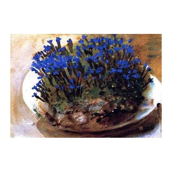 cuadros decorativos - Cuadro -Gencianas azules-