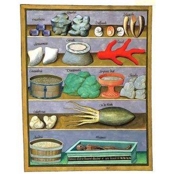- Cuadro -Libro de las medicinas sencillas 1- - Platearius, Matthaeus