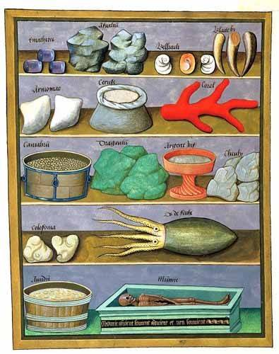 cuadros-decorativos - Cuadro -Libro de las medicinas sencillas 1- - Platearius, Matthaeus