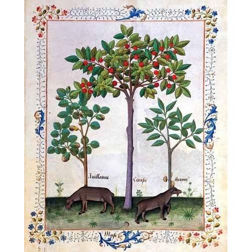 cuadros decorativos - Cuadro -Libro de las medicinas sencillas 3-