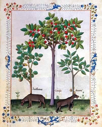 cuadros-decorativos - Cuadro -Libro de las medicinas sencillas 3- - Platearius, Matthaeus