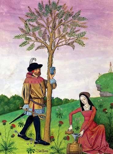 cuadros-decorativos - Cuadro -Libro de las medicinas sencillas 4- - Platearius, Matthaeus