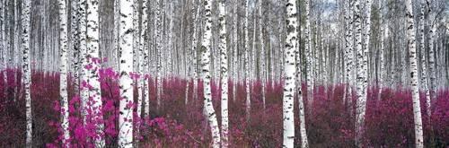 cuadros-de-fotografia - Cuadro -CUGAT-54- - Naturaleza, Fotografia de