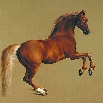 cuadros de fauna - Cuadro -Whistlejacket- (caballos) - Stubbs, George