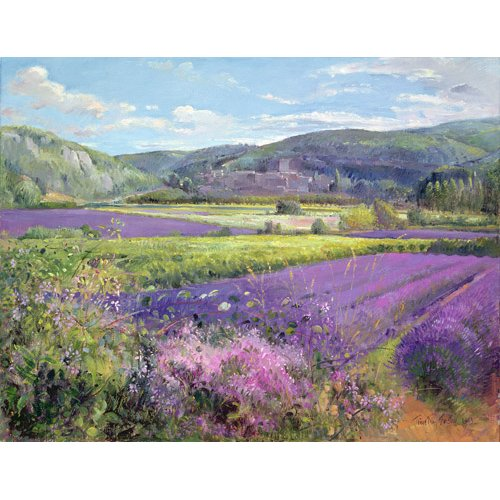 Cuadro -Lavender Fields in Old Provence -