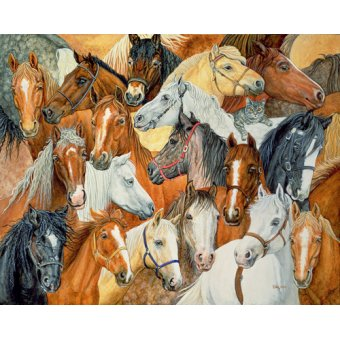 cuadros de fauna - Cuadro -Dee's Horse-Blanket- - Ditz