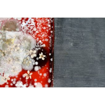 cuadros abstractos - Cuadro  -Immortality 2- - Millar, Charlie