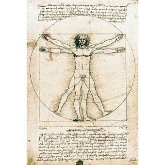 - Cuadro -Hombre de Vitruvio- ó -Estudio anatómico- - Vinci, Leonardo da