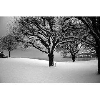Cuadro - New York -2- - Naturaleza, Fotografia de