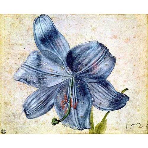 cuadros de flores - Cuadro -Estudio de una lila -