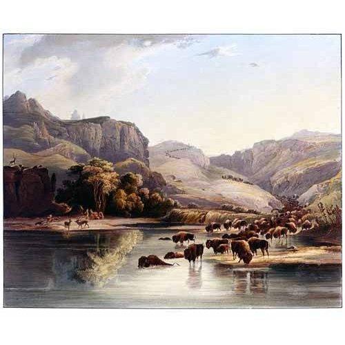 cuadros de mapas, grabados y acuarelas - Cuadro -Manadas de bisontes y alces-