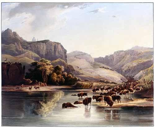 cuadros-de-mapas-grabados-y-acuarelas - Cuadro -Manadas de bisontes y alces- - Bodmer, Charles