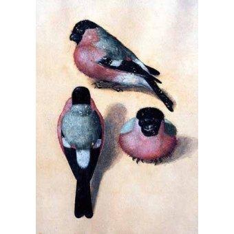 - Cuadro -Un pájaro en tres posiciones- - Dürer, Albrecht (Albert Durer)