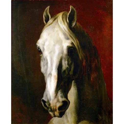 cuadros de fauna - Cuadro -Cabeza de caballo blanco-