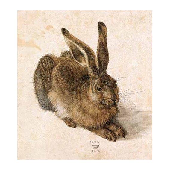 cuadros de fauna - Cuadro -Joven Liebre-