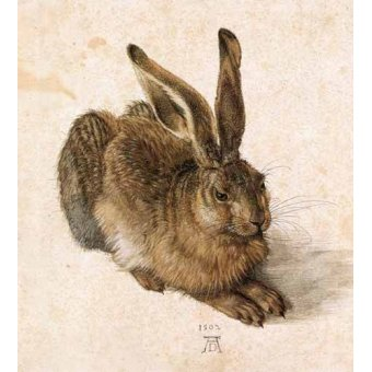 cuadros de fauna - Cuadro -Joven Liebre- - Dürer, Albrecht (Albert Durer)