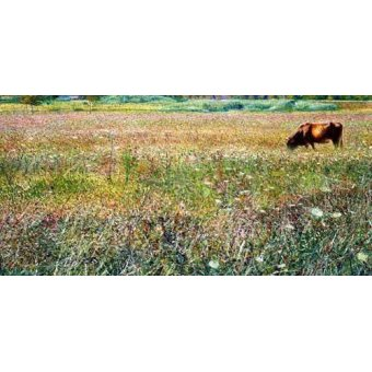 - Cuadro -Roman countryside- - Boccioni, Umberto