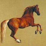 cuadros de fauna